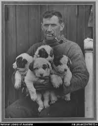 shack-cachorros-perro