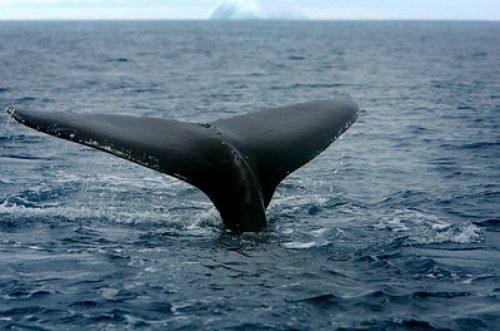 Greenpeace reclama el Santuario Antártico